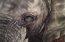 Elephant, 2012
