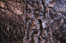 Hallow Tree, 2008